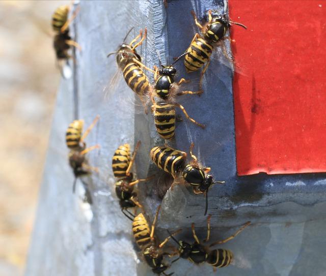 Control de plagas en Sant Martí de Centelles
